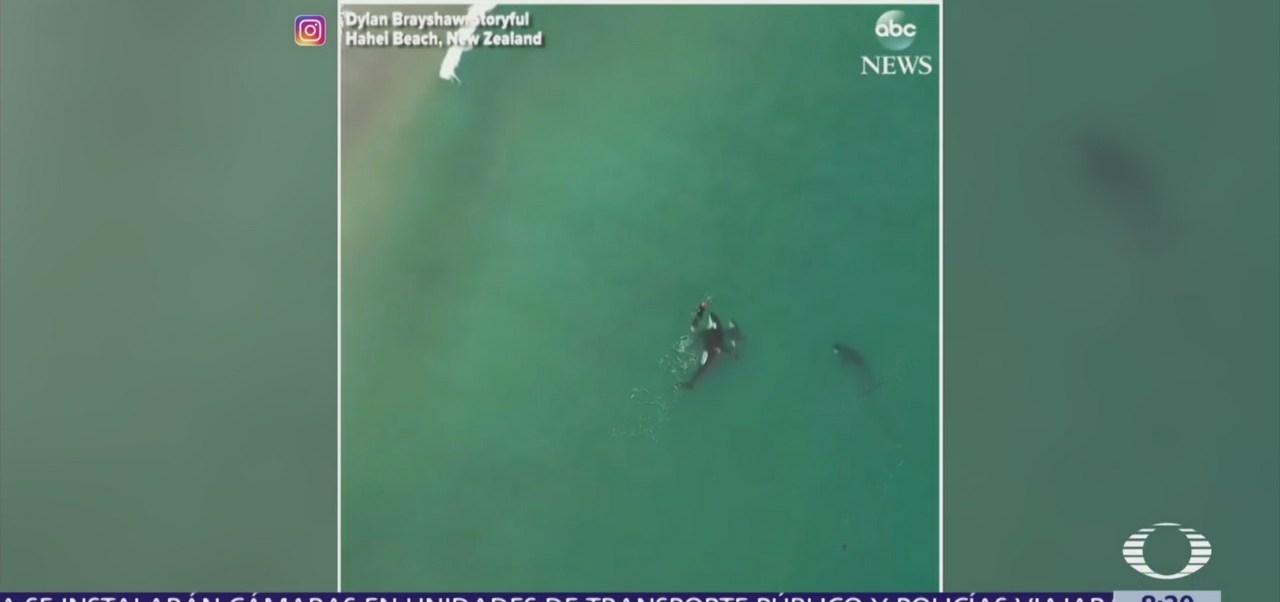 Orcas se acercan a mujer para nadar junto a ella
