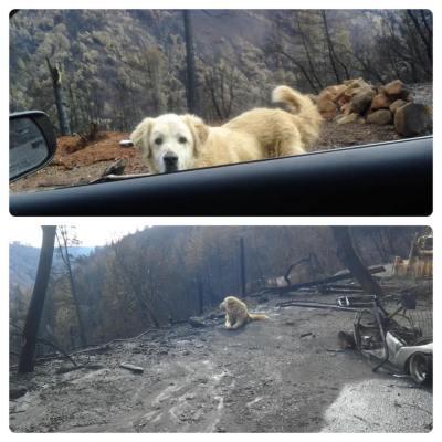 Pareja regresa a su casa incendiada y descubre que su perro nunca se fue