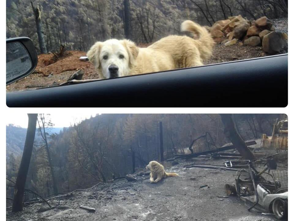 pareja-regresa-casa-incendio-perro-esperaba