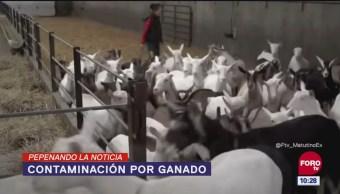 Pepenando La Noticia: Contaminación por ganado