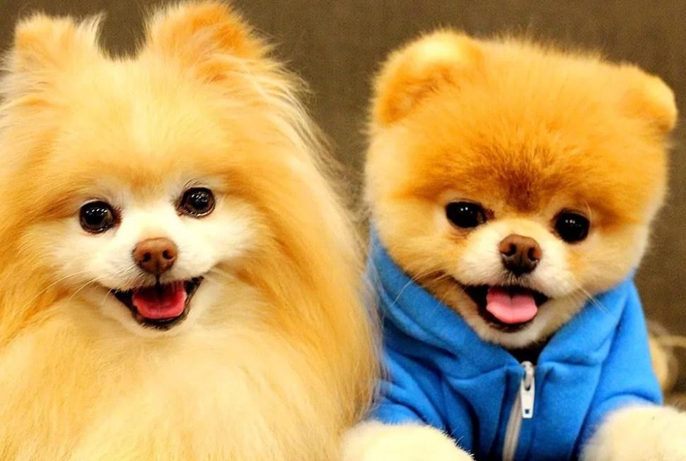 Los perros son estrategas, mienten y manipulan a sus dueños para conseguir lo que quieren