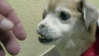 Video Perrito Perro Nariz Busca Hogar