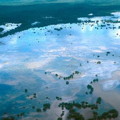 Incendios y tala ilegal devastan manglares en Los Petenes, Campeche