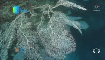 Por El Planeta Los Abanicos De Mar