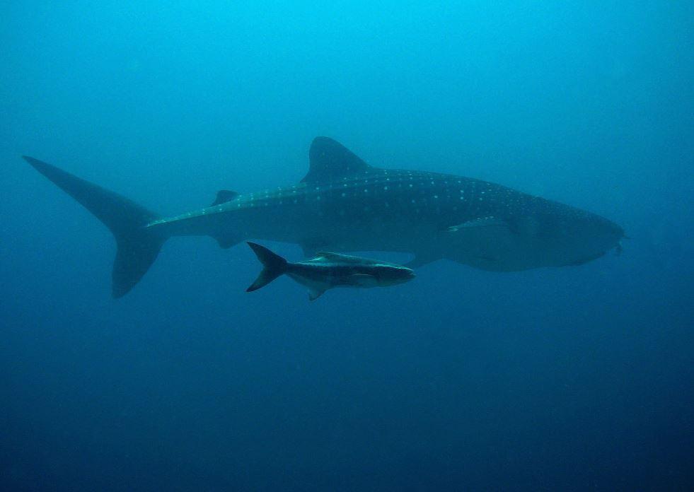 Premian a niñas de concurso de cuento con nado con tiburones