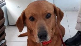 Adoptan perrito, pero lo devuelven por robar comida