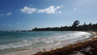 Sargazo en Cancún, limpian playas por nuevo arribo