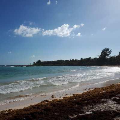 Ante nuevo arribo de sargazo, intensifican limpieza de playas en Cancún