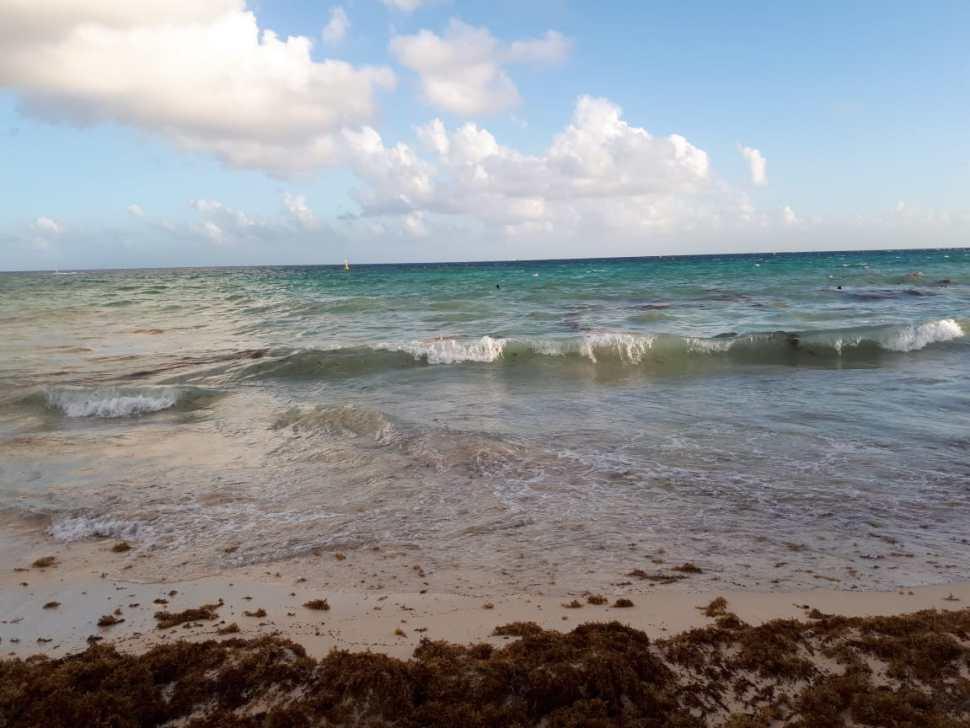 Ante nuevo arribo de sargazo, intensifican limpieza de playas
