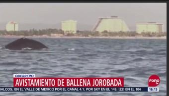 Ballena Jorobada Sorprende A Turistas En El Puerto De Acapulco, Ballena Jorobada, Puerto De Acapulco, Playa Revolcadero