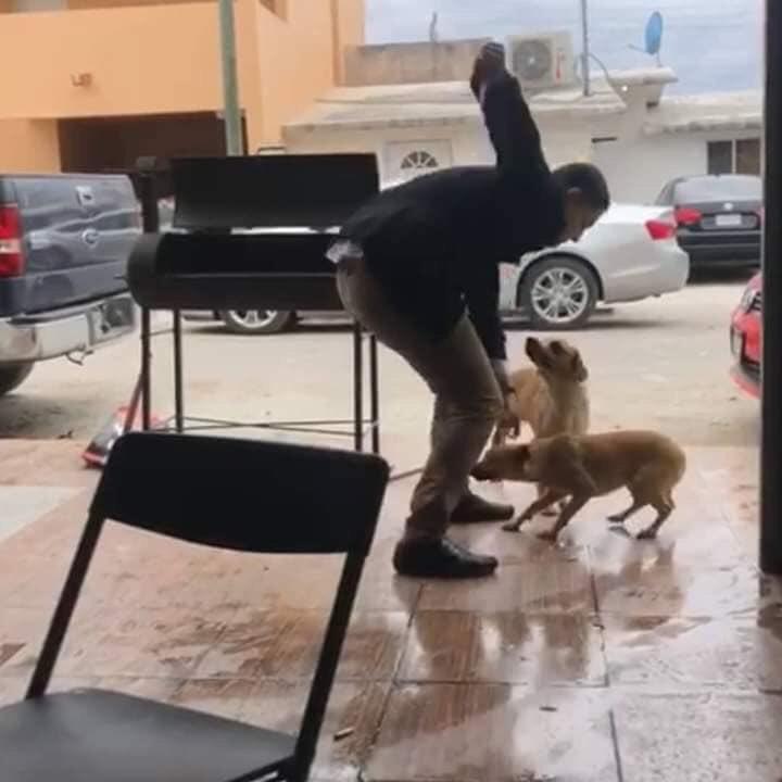 Buscan hombre que apuñala perro en Piedras Negras, Coahuila