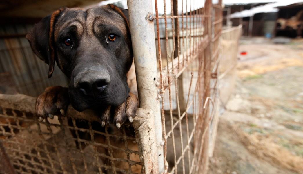 Maltrato-animal-Trastorno-mental-perros-maltratados-Psicologia