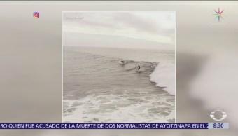 Delfines surfean con joven en Ventura, California
