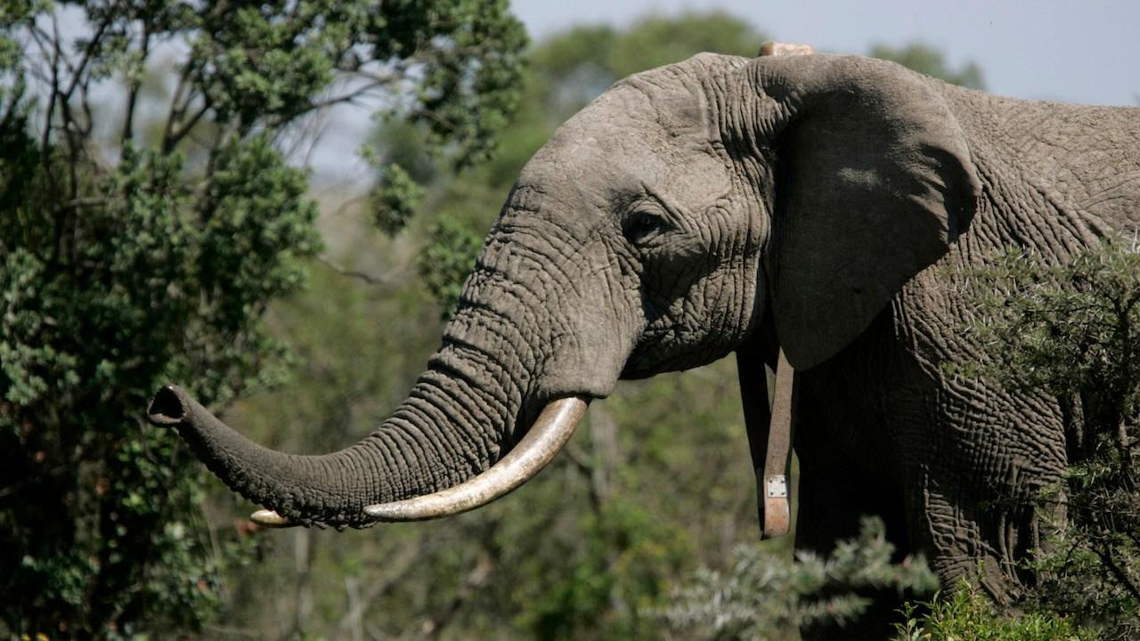 Elefante-Animales-atacan-Muere-hombre-Sri-Lanka