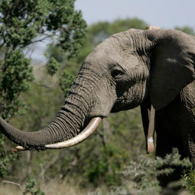 Video: Hombre intenta hipnotizar elefante y muere aplastado