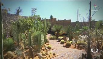 Arquitecto presenta iniciativa para convertir basurero en jardín botánico en Monte Albán