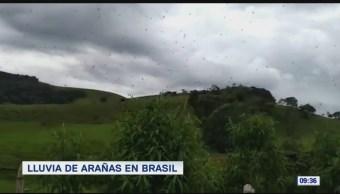 Extra, Extra: Lluvia de arañas en Brasil