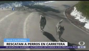 Familia rescata a perros en carretera de Baja California