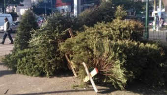 CDMX: Centros de acopio para reciclar árboles de Navidad