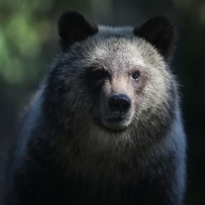 Video: Niño perdido en el bosque asegura que un oso lo protegió