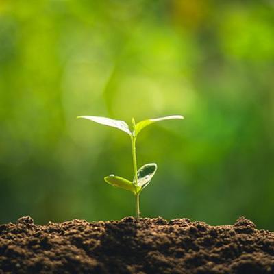 ¿Sabías que las plantas pueden sentir y oler?