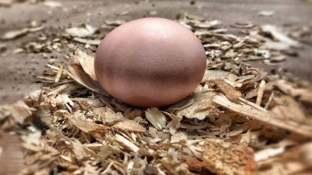 foto huevo gallina cancer 31 julio 2017