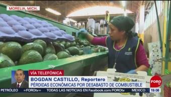 Industria Del Aguacate No Está Riesgo Michoacán Gasolina