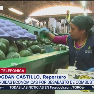 Industria del aguacate no está en riesgo en Michoacán