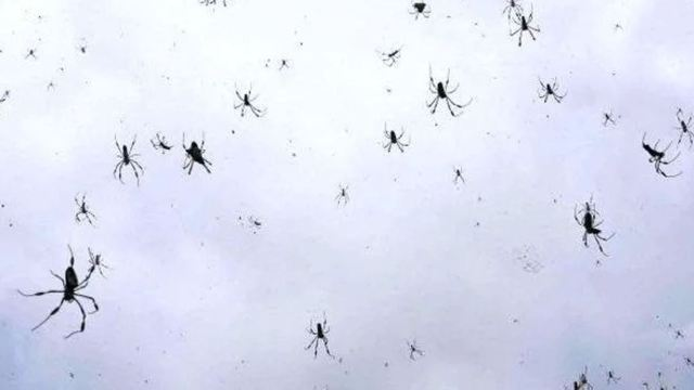 Captan en video impactante lluvia de arañas en Brasil