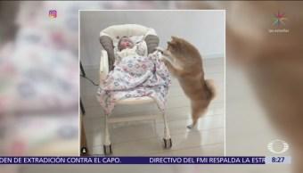 Perro consuela el llanto de un bebé