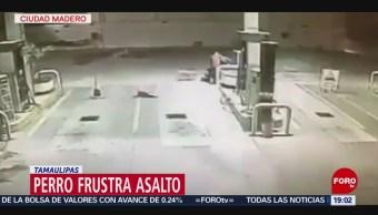 Perro Frustra Asalto Gasolinera De Tamaulipas