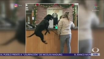 Perro se emociona por acudir al veterinario