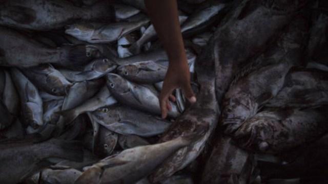 Lo que debes saber de las mujeres pescadoras en Yucatán