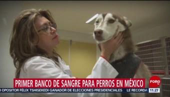 Primer banco de sangre para perros en México
