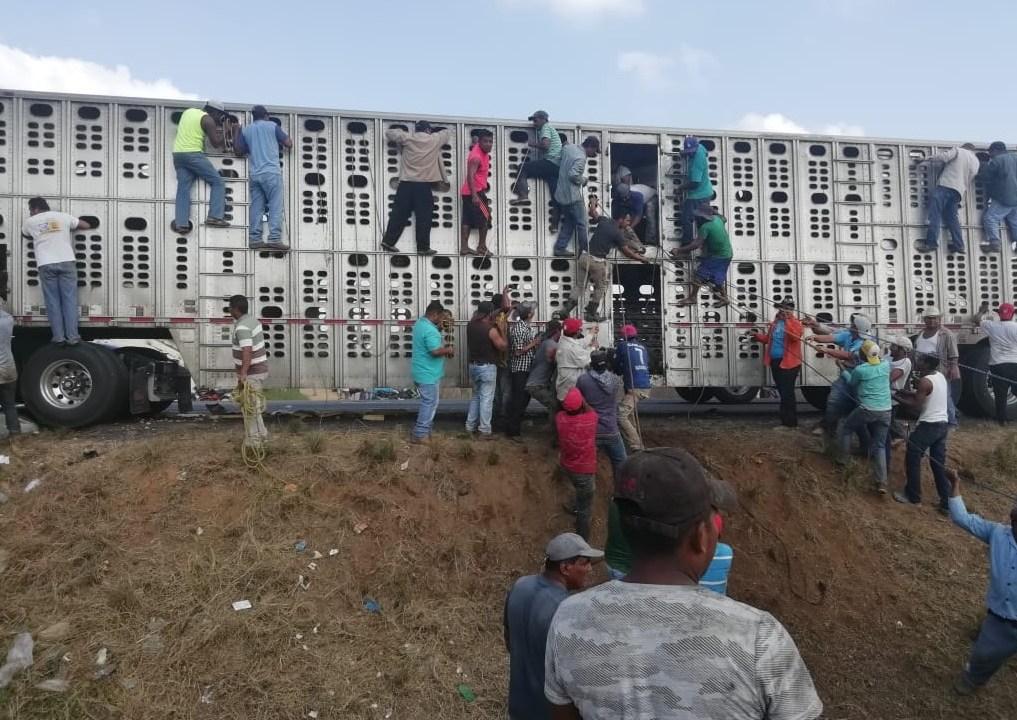 Veracruz: Pobladores roban y sacrifican ganado en autopista