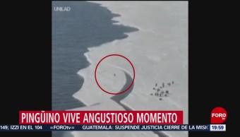 Pingüino Queda Atrapado En Iceberg Entretenimiento