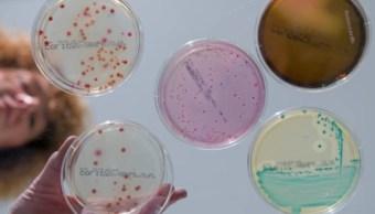 Identifican dos tipos de bacterias del intestino relacionadas con la depresión