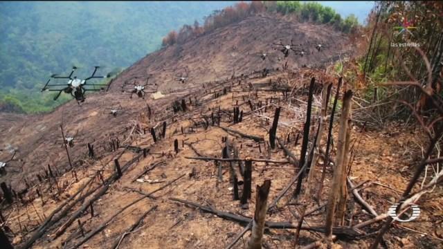 Foto: Reforestación Drones Árboles Semillas 25 de Febrero 2019