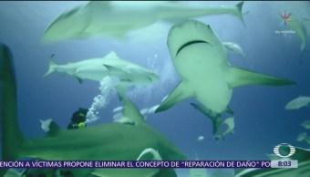 El tiburón toro y su evolución