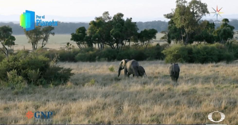 Foto: Elefantes en el Triángulo Mara, en Kenia, febrero de 2019