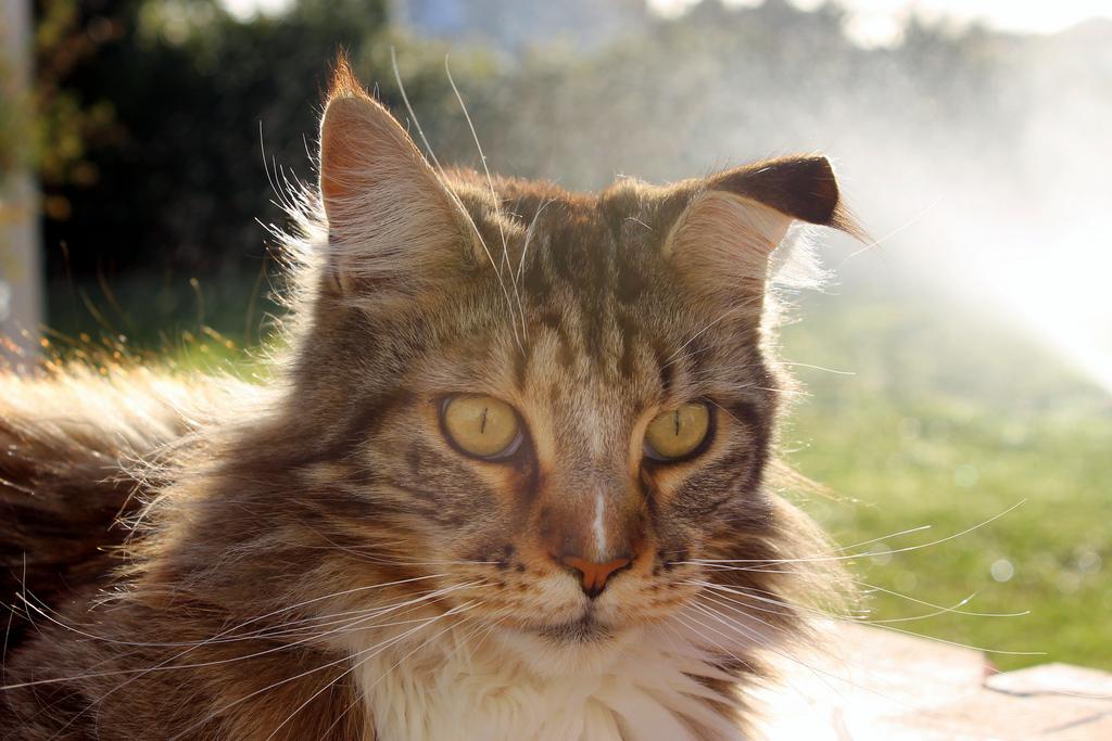 Gato-Gatos-Operacion-Cirugia-Mujer-opera-Cirugia-Estética-animales-Animales-Crueldad-animal-Maltrato, Ciudad de México, 28 de febrero 2019