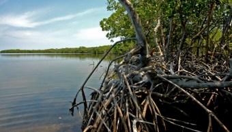 Foto: Los humedales de la Reserva de la Biosfera los Petenes, en Campeche, febrero 3 de 2019 (Archivo/Twitter: @CONANP_mx)