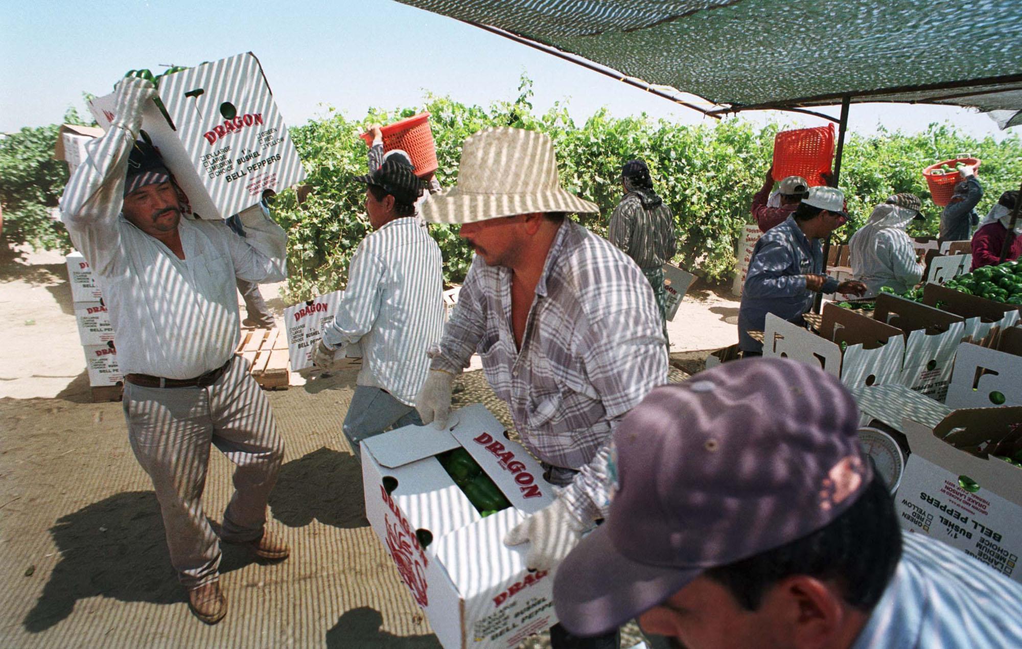 inmigrantes-estados-unidos-campo-agricultura-foto-13-mayo-1999