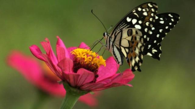 La extinción de los insectos: En 100 años no habrá ninguno