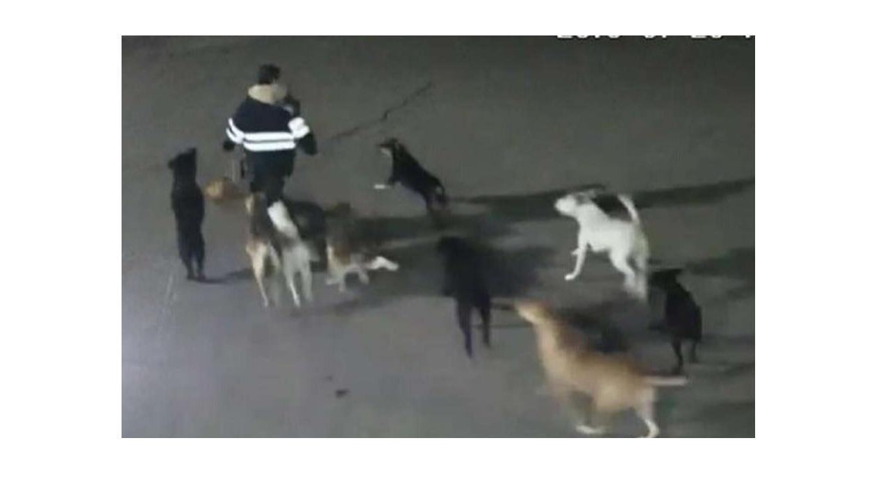 Foto: Difunde video de jauría de perros que ataca a una mujer en Tecámac, Estado de México, febrero 2 de 2019 (FOROtv)