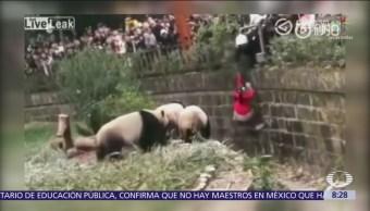 Niña cae a hábitat de los pandas en zoológico chino