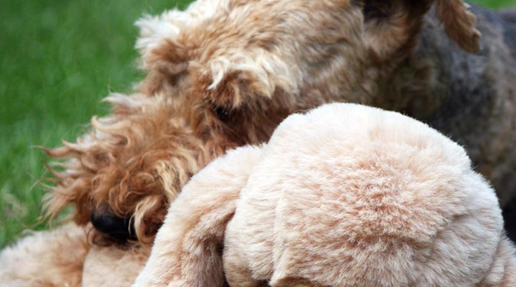 Video: Perro roba oso de peluche de San Valentín