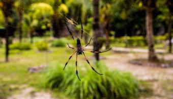Foto Veneno araña más efectivo que el Viagra 8 marzo 2019