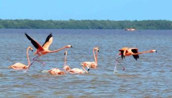 Foto: Áreas naturales protegidas de Yucatán. 28 de febrero 2019. Twitter @GobYucatan