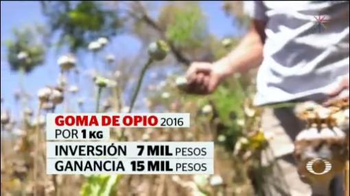 Foto: Precios Goma Opio Amapola Economía Guerrero 27 de Marzo 2019
